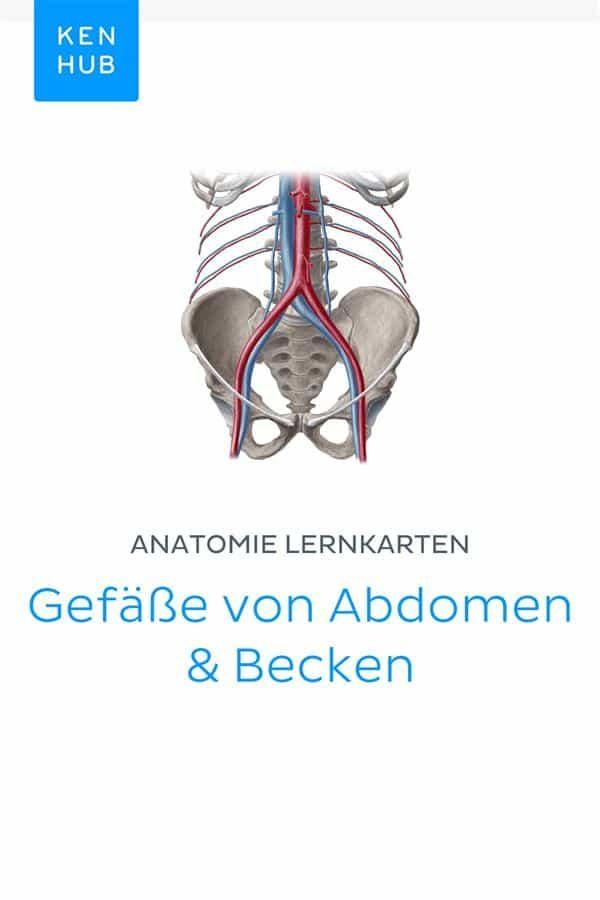 Anatomie Lernkarten: Gefäße Von Abdomen & Becken (ebook) · Ebooks ...