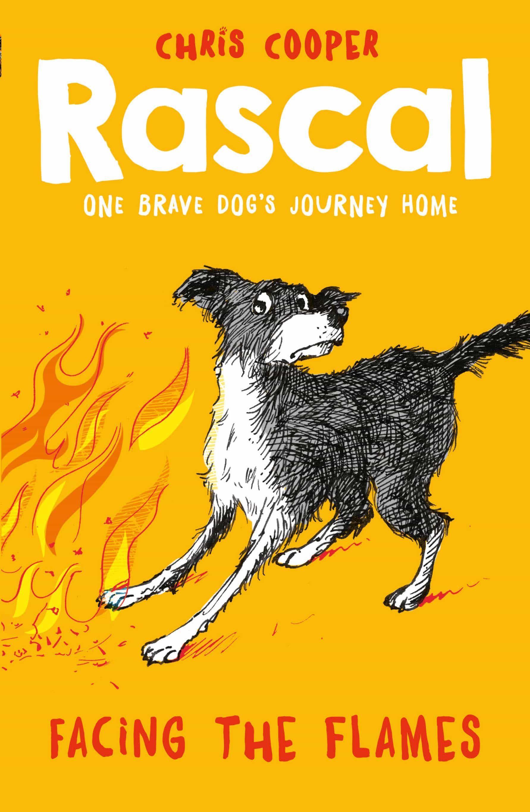 Rascal One Brave Dog S Journey Home