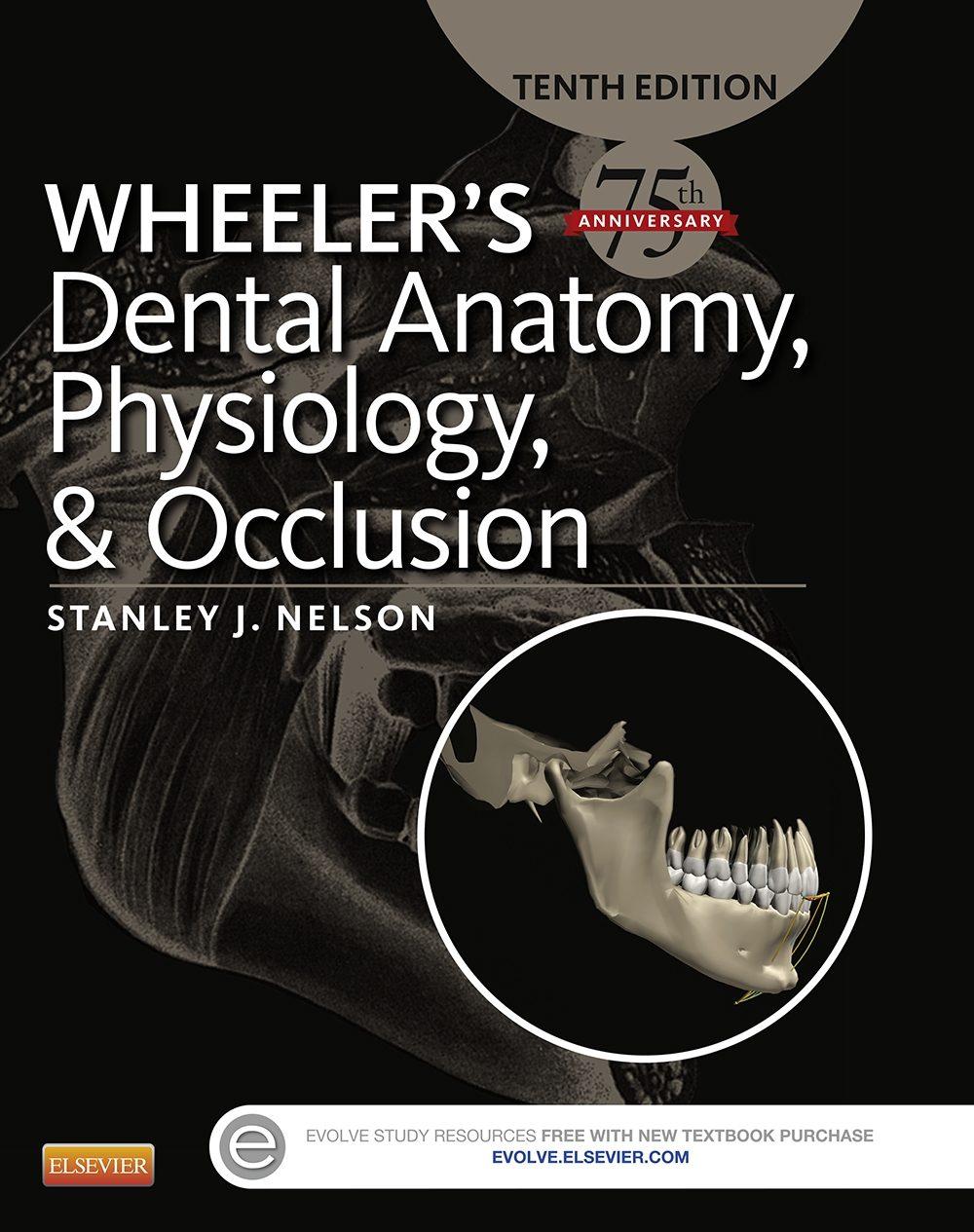 Wheeler\'S Dental Anatomy, Physiology And Occlusion - E-Book (ebook ...