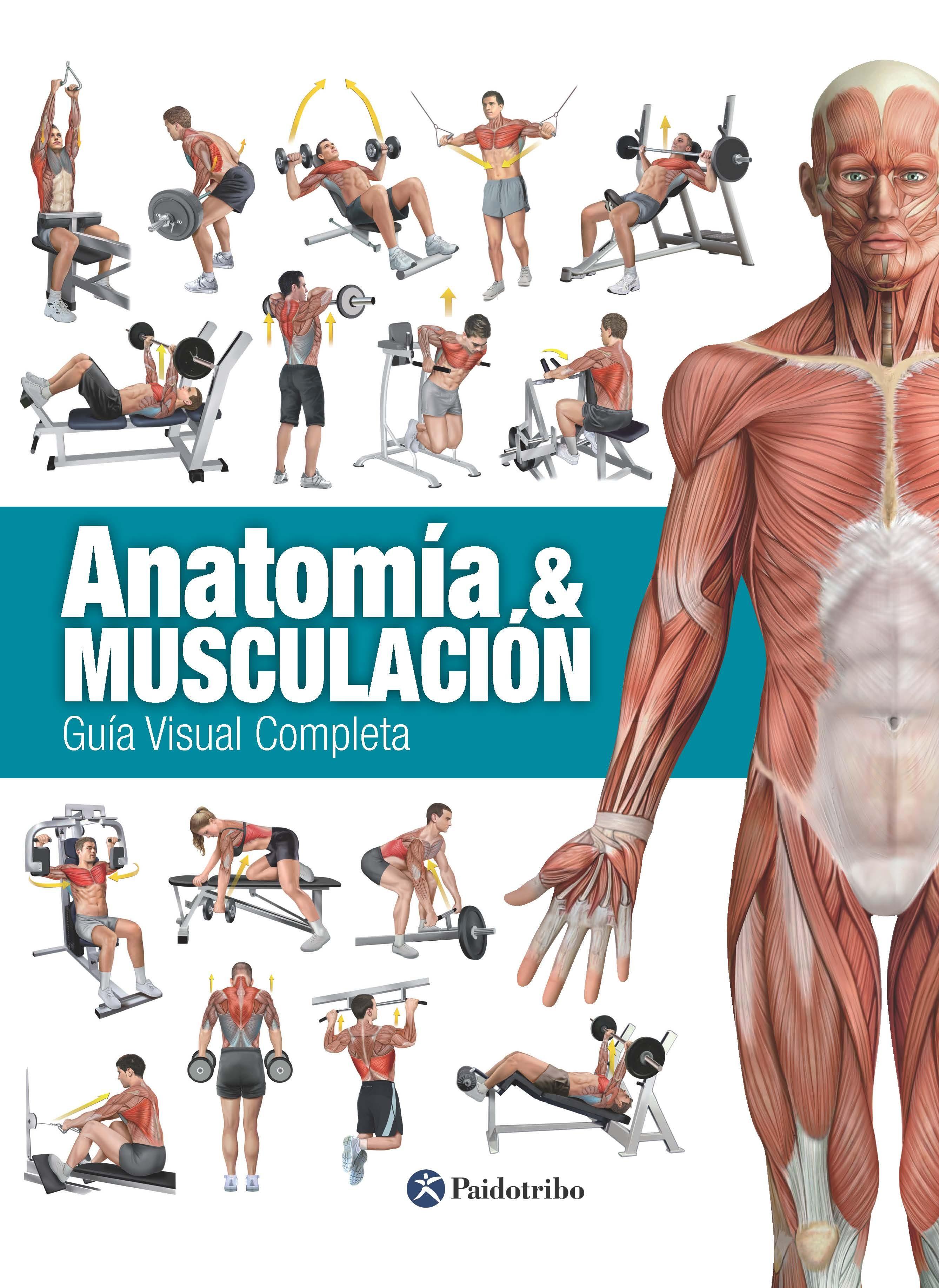 Anatomía & Musculación (Color) (ebook) · Ebooks · El Corte Inglés