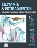 Anatomía & estiramientos.