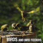 How they live... Birds (ebook)