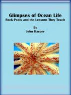 Glimpses of Ocean Life: Rock-Pools and the Lessons They Teach