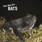 How they live... Bats (ebook)