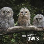 How the live... Owls (ebook)