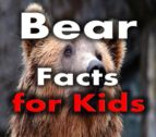 BEAR FACTS FOR KIDS